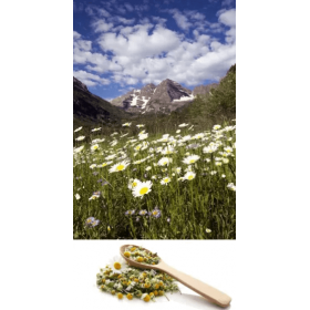 Wild Mountain Chamomile...
