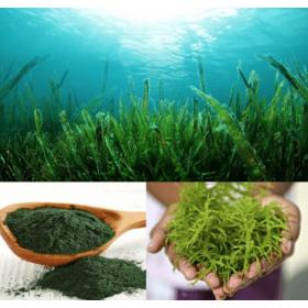 Organic Spirulina Herb 100g